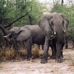 Lesson to Learn from Elephants
